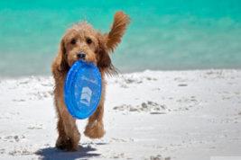 Le spiagge per i cani ad Ibiza