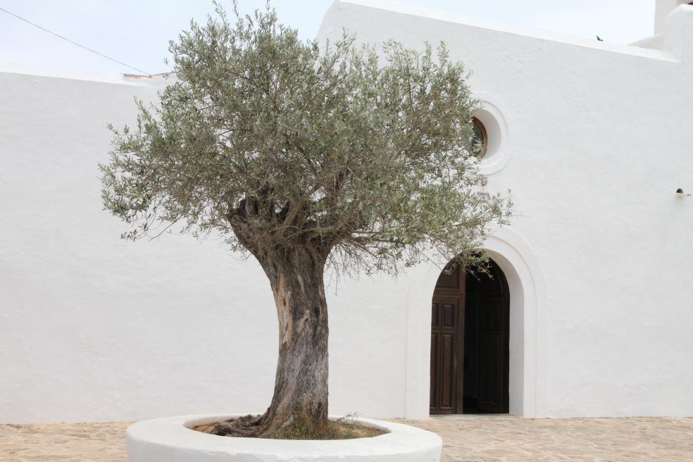 santa Inés Ibiza